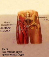 «Развитие физических способностей тела в танцевальном спорте» Автор: Кривошеева С.В.